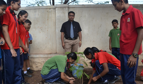 Tree Plantation  in the School
